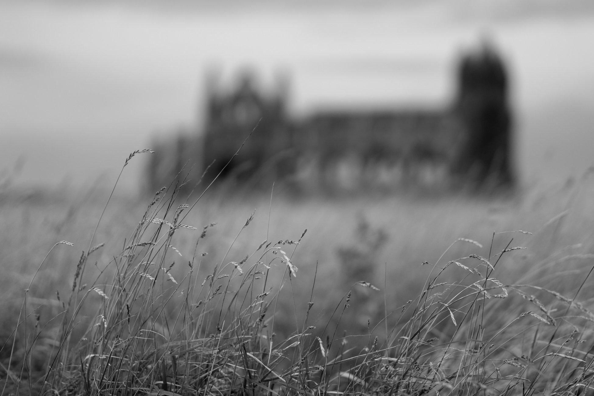 Autumn at Whitby abbey