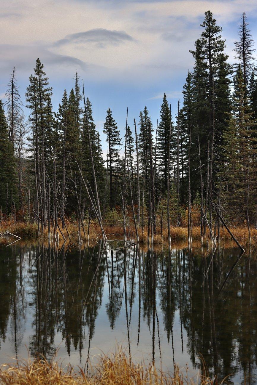 Maclean creek