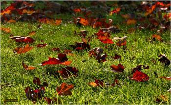 Basking Leaves.
