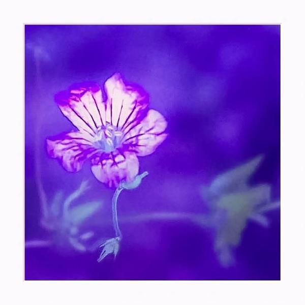 A Bit of Purple by LoryC