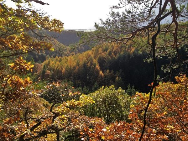 Staward Gorge, Northumberland by NorthernWayfarer