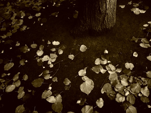 autumn leaves #3 by leo_nid