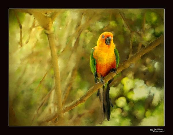 Oil painting Macau parrot by Jas2