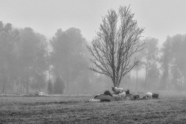 Sheep by Leikon