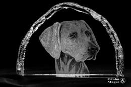 Glass Engraving-Weimaraner