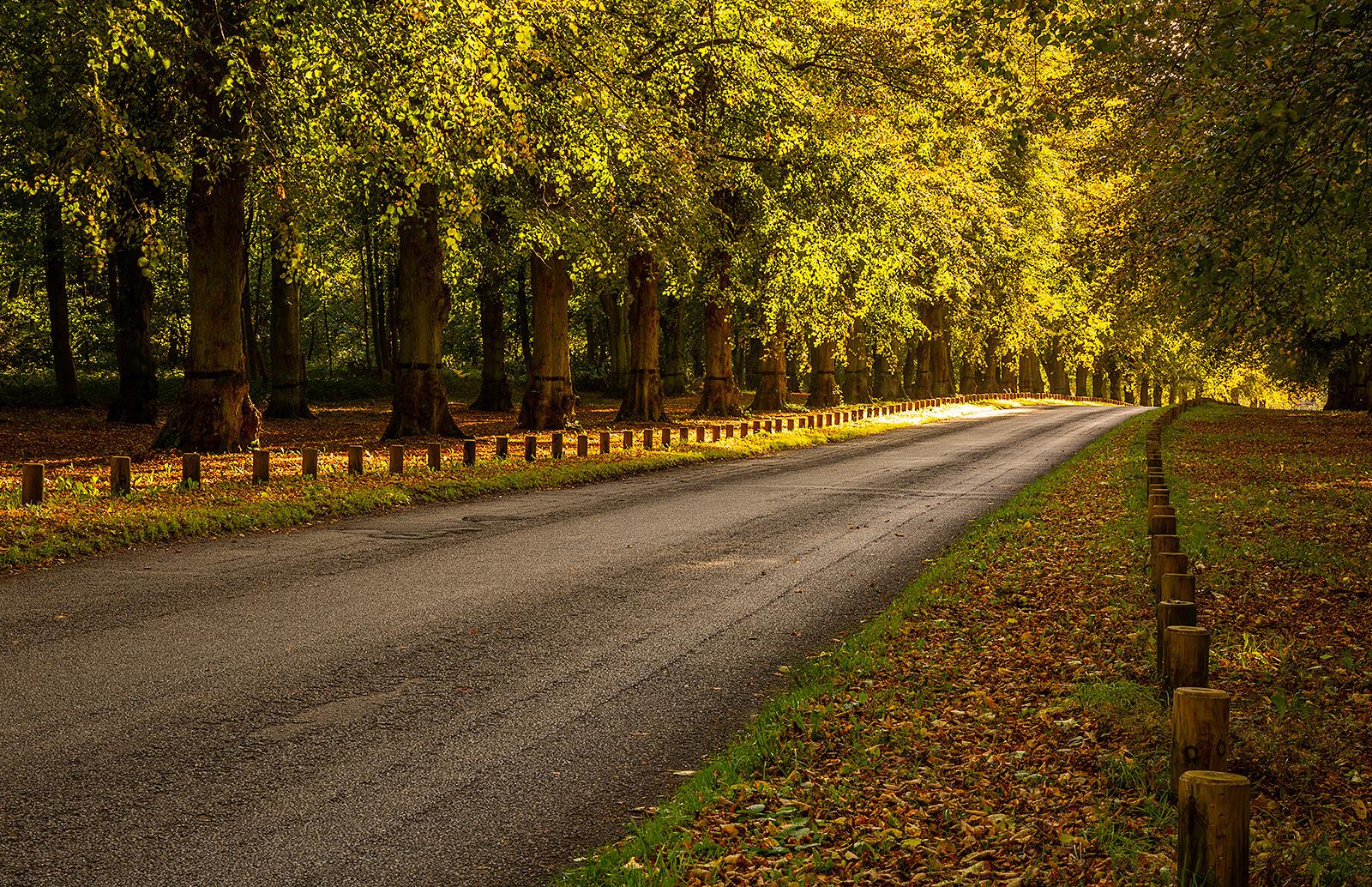 Avenue to the Sun