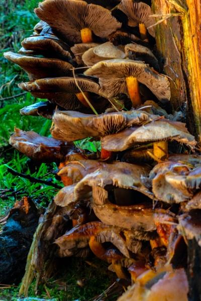 Tree stump fungi by terra