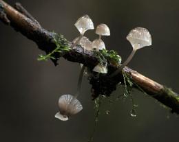 Mushrooms on a Stick