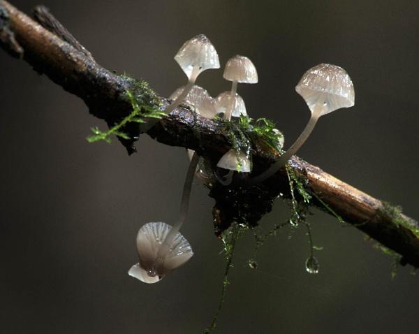 Mushrooms on a Stick by viscostatic