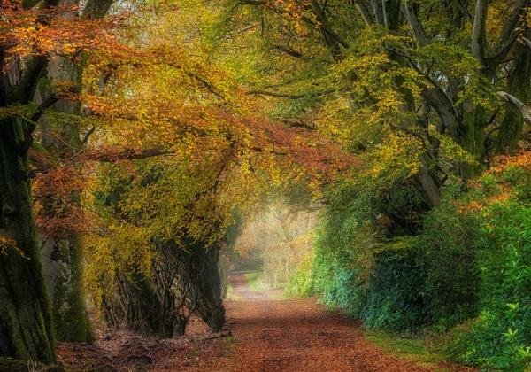 Path through Autumn by douglasR