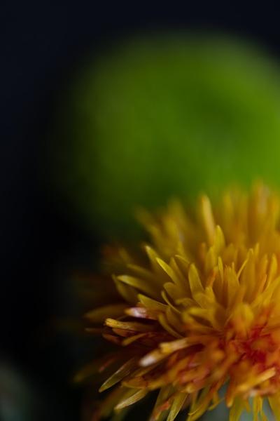 Flowers by CRAIGR2