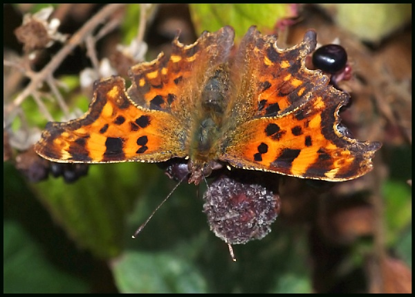 Comma :- by Badgerfred