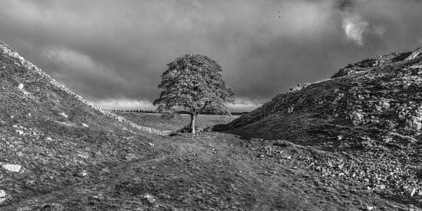 Sycamore Gap by AndrewAlbert