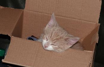 Asleep in my box