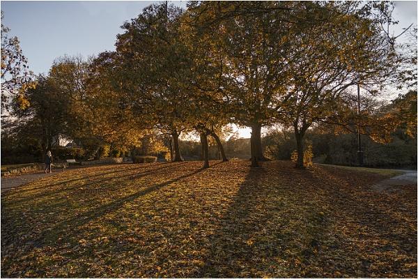 Autumn Glory by stevenb
