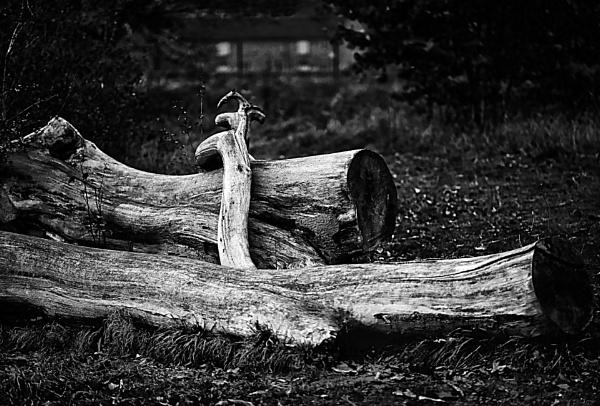 Big Log by dudler