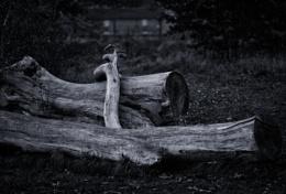 Big Log