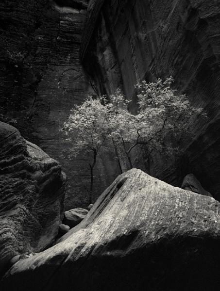 Trees in a dream by mlseawell
