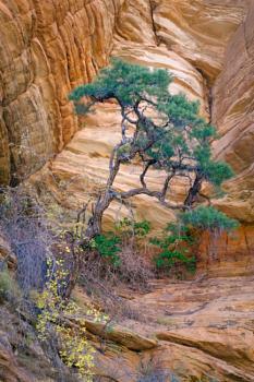 Tree of Zion