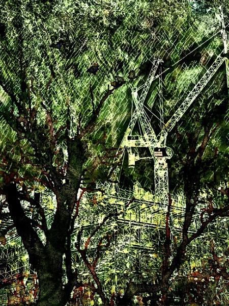 Cranes v Trees by RLF