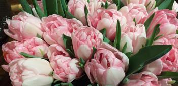VIP Flowers...