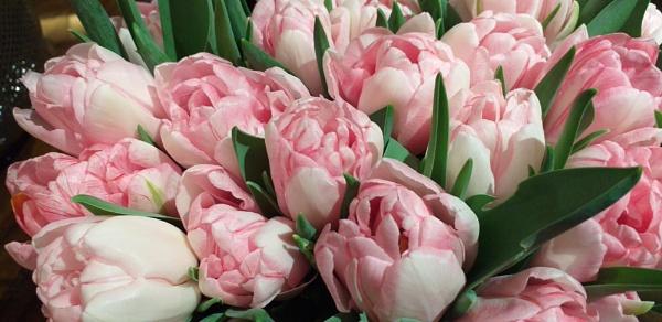 VIP Flowers... by Chinga