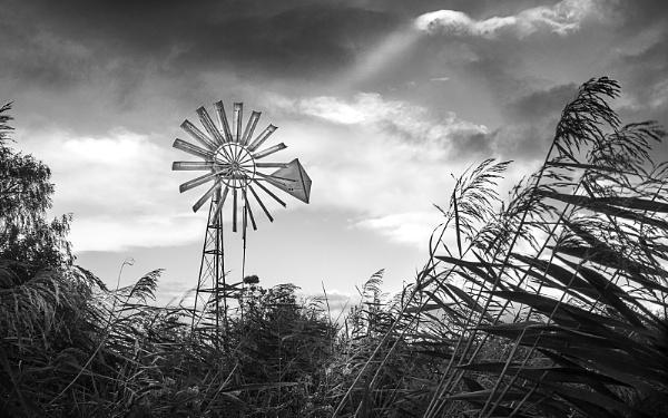 Blowing in the Wind by HelenaJ