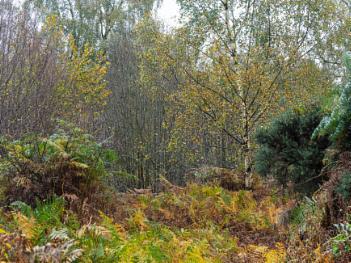 Autumn colours, Haveringland woods.