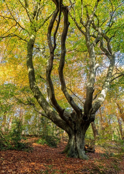 Autumnal woods, Lion\'s Mouth, Aylmerton by pdunstan_Greymoon