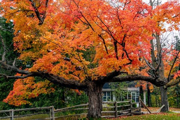 Autumn Show by manicam