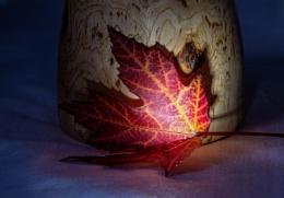Autumn Colour?
