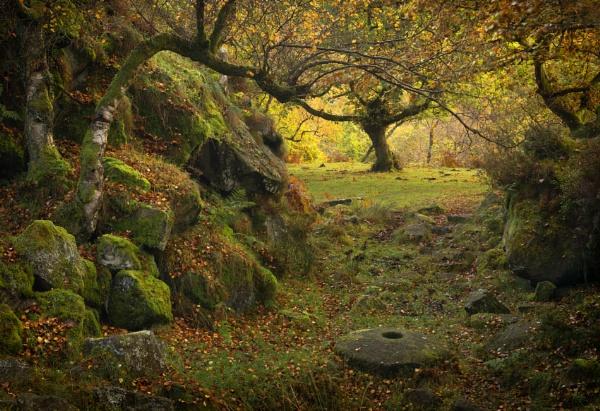 Autumn Medley by Trevhas