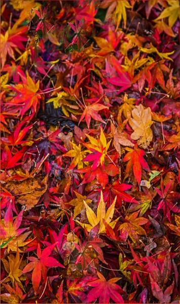 autumnal detritus... by estonian