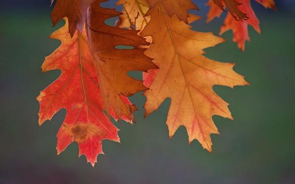 Fall colors by LaoCe