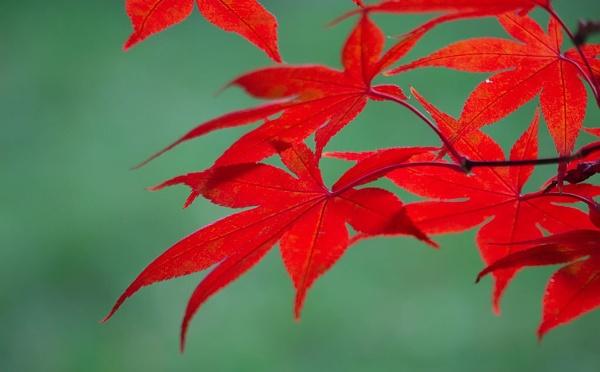 Autumn 2020 by LaoCe
