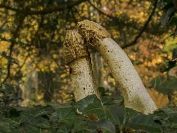 """Love"" Fungi style"