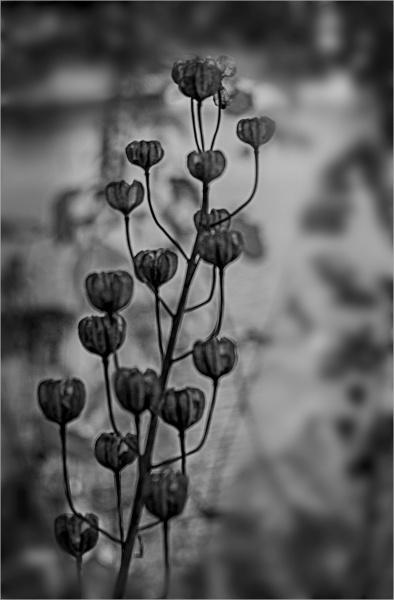 Seedpods by AlfieK