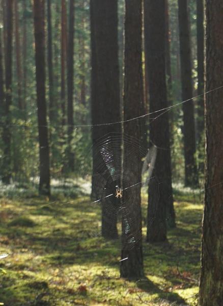 Spider webs in the sun by SauliusR