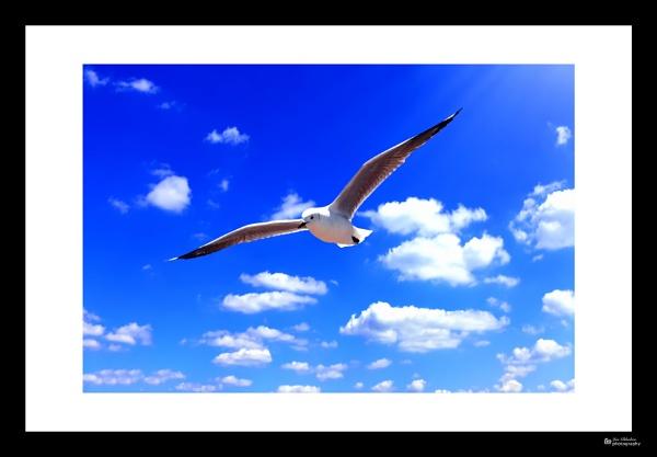 SA tern by Jas2