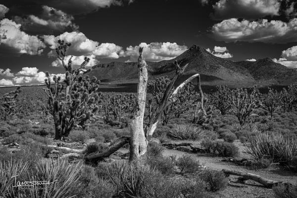 Arizona\'s Joshua tree forest by IainHamer