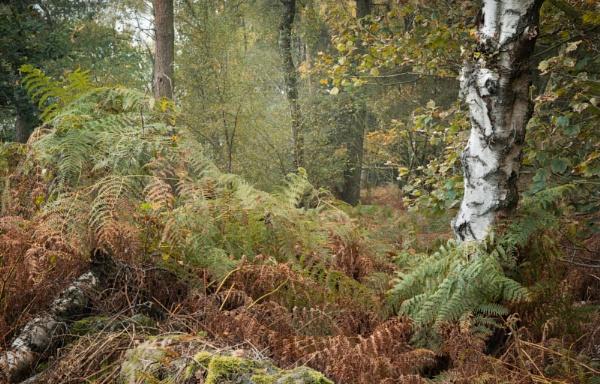 Autumn Woodland by JelFish