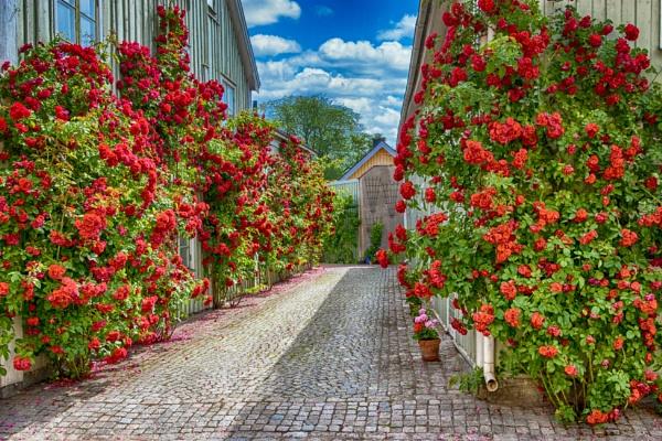 Roses by Leikon