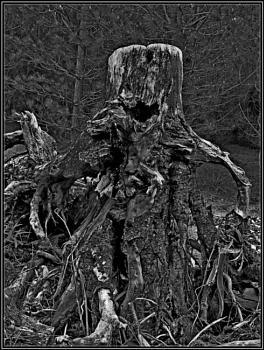 """ Treebeard """