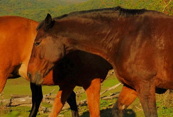 Horse - Mix by elousteve