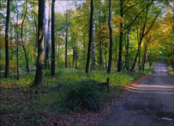 Savernake forest. by niknakpaddywhack
