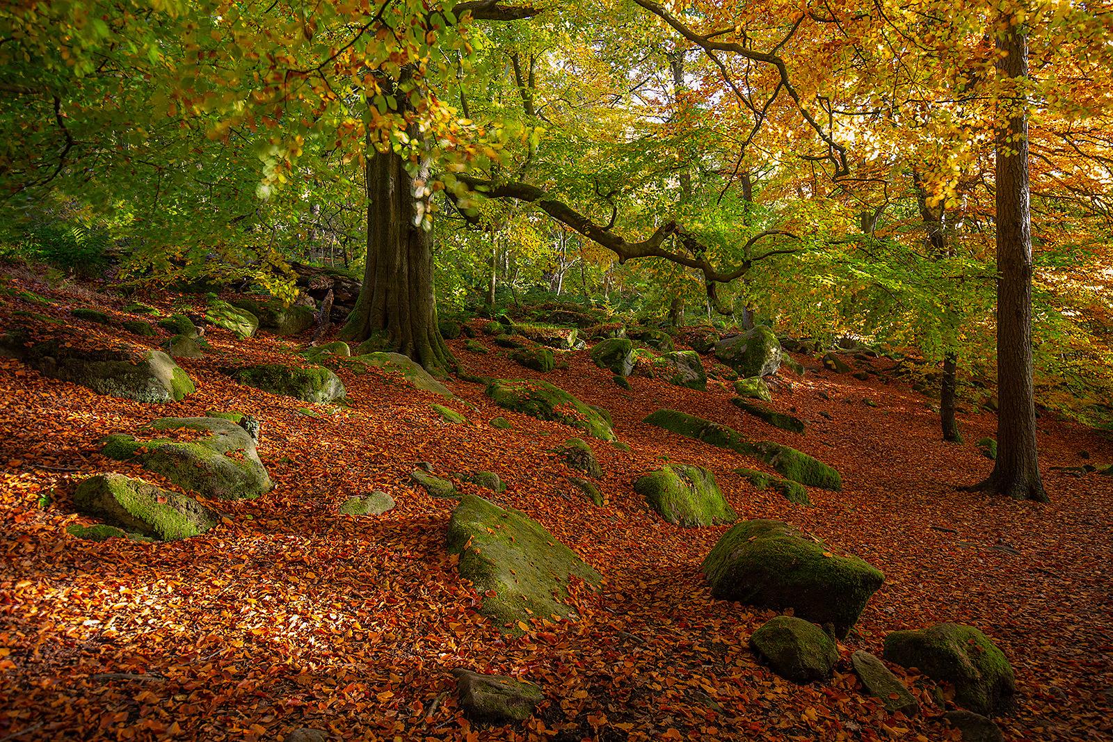 Autumn at Padley