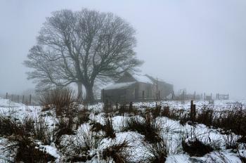 The Foggy Barn.