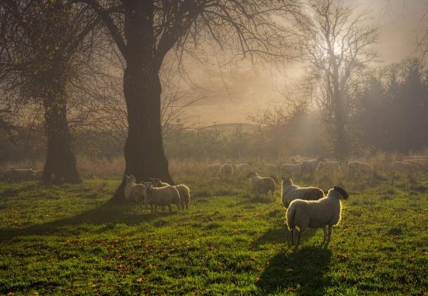 Posing in the Mist by douglasR