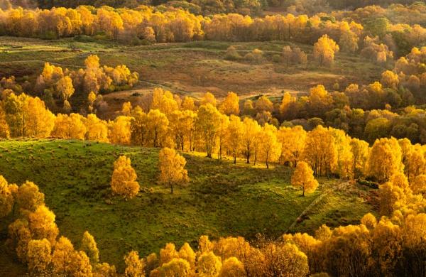 Finglas woods by PaulHolloway
