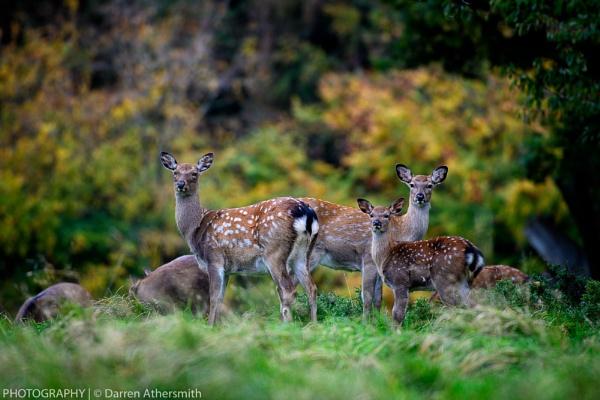 Bambi by dathersmith